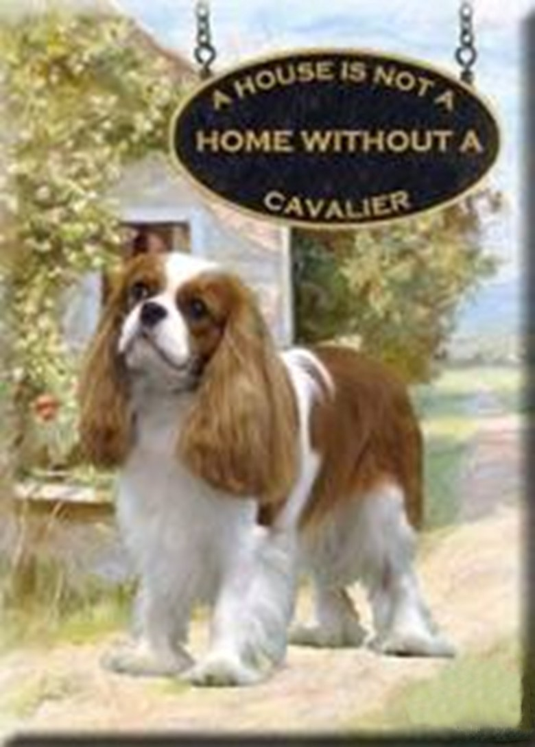 ZH~Zodiac A House Is Not A Home Without A Cavalier King Charles Spaniel In Michigan Is Not A Home Without A Cavalier
